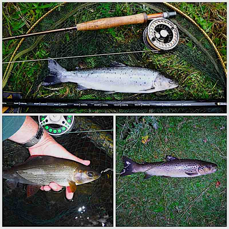 Welsh Dee Sea trout, brown trout & grayling but no salmon ...